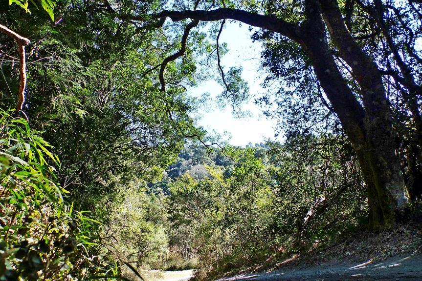 Objectives Mbona trees