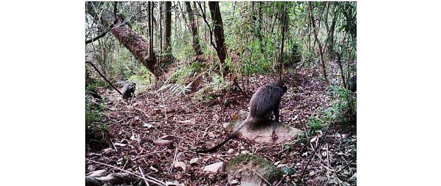 Objectives Samangos foraging forest floor