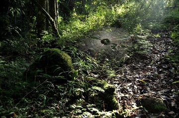 kctforest