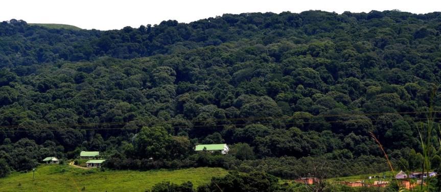 mistbelt forest, lemonwood cottages, dargle valley, samango monkey, safari, airbnb experience, midlands meander, karin saks, hiking, walking, sykes monkey, blue monkey, samango monkey research project, midlands, kwazulu natal.