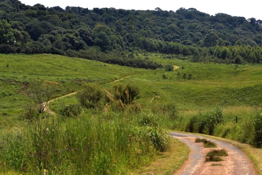 lemonwood cottages, midlands meander, samango monkey, airbnb experience, walks, hiking, karin saks, samango safari, sykes monkey, blue monkey,