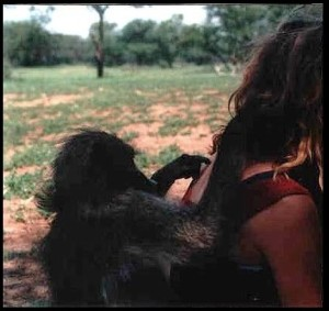 baboons, human baboon conflict, wildlife solutions, primates, south africa, kwazulu natal, cape,
